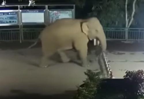 слон нелегально перешёл границу
