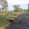 кенгуру сбил велосипедистку
