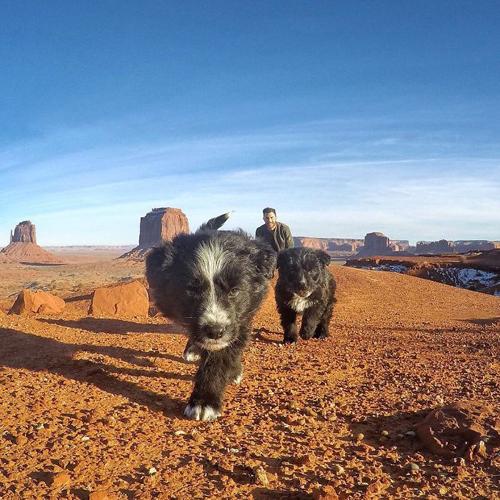 щенков спасли из пустыни