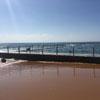 миллионы личинок на пляже