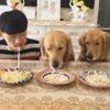 соревнование по поеданию лапши