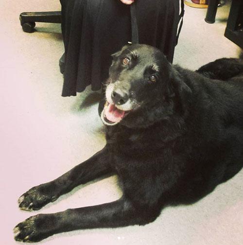 собака нашлась 10 лет спустя