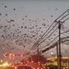 многочисленная стая птиц