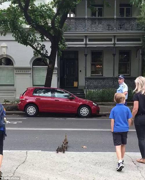полицейские помогли утке с утятами