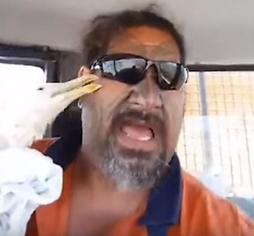 неблагодарная раненая чайка