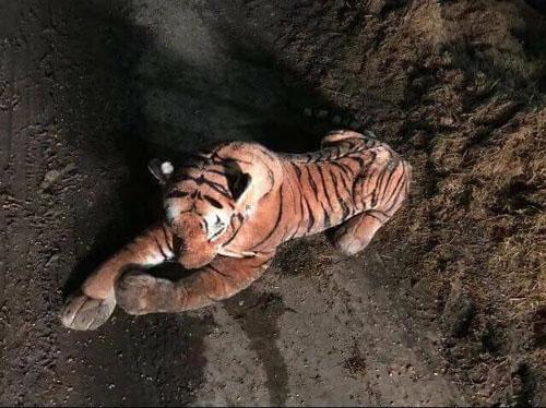 игрушечный тигр всех напугал