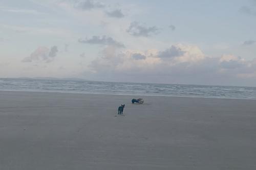 пугающее существо на пляже