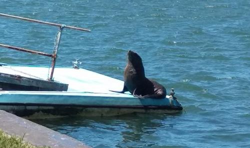 тюлень принял солнечную ванну