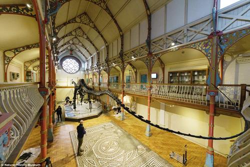 скелет динозавра успешно собрали