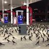 птицы на автозаправке