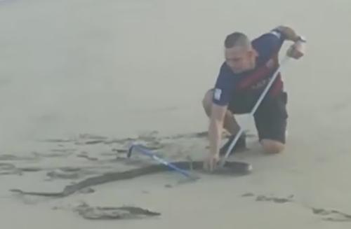 чёрная мамба на пляже