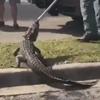 аллигатора извлекли из-под машины