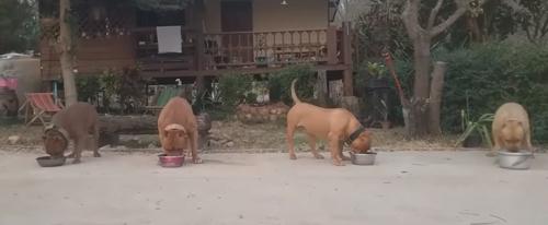 послушные голодные собаки