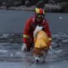 пожарный спас провалившуюся собаку