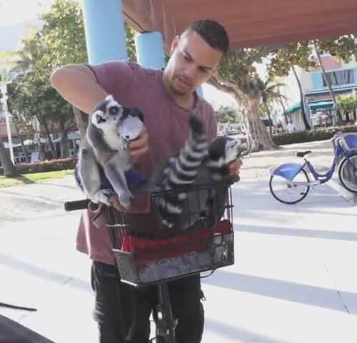 лемуры в велосипедной корзинке