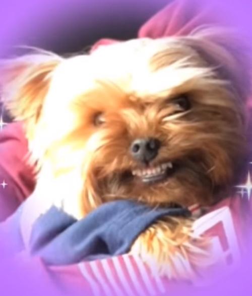 мерзкая улыбка собаки