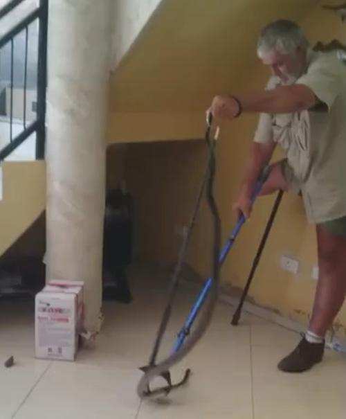 змеелов поймал чёрную мамбу
