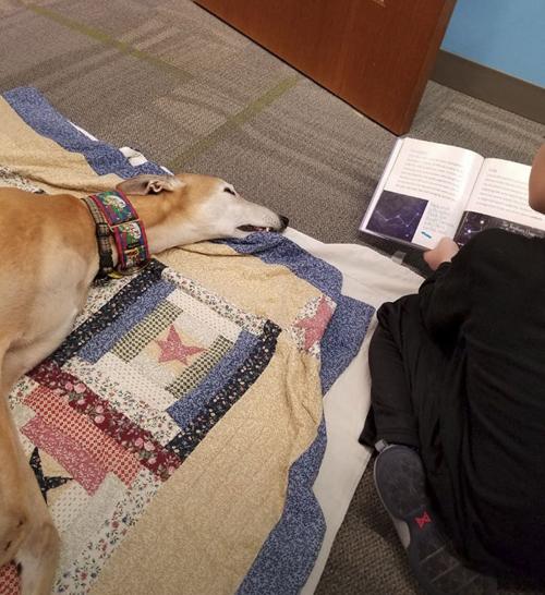 пёс работает в библиотеке