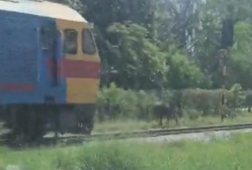 лошадь гоняется с поездом