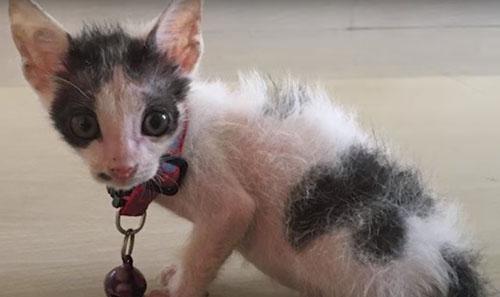 шанс на новую жизнь для котёнка
