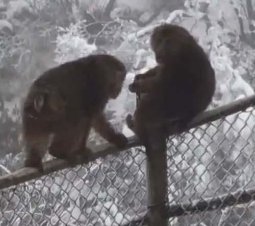 обезьяна украла кошелёк