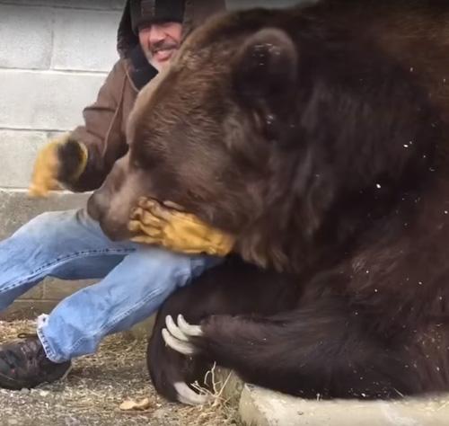 медведь обнимается с лучшим другом
