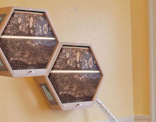 домашние ульи для пчёл