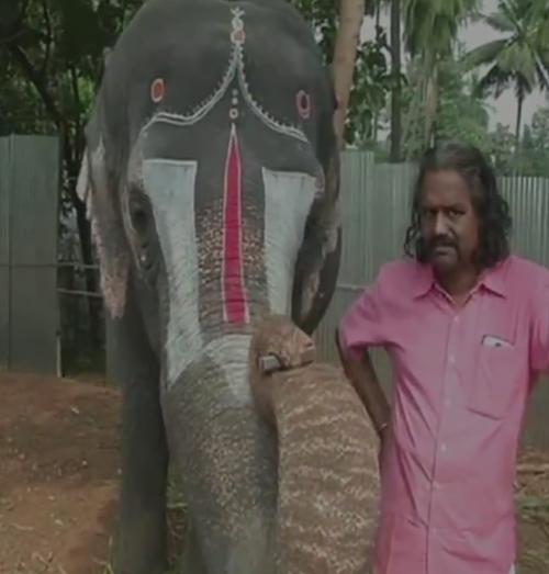 слон играет на губной гармошке