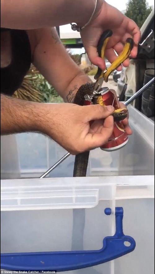 змея застряла в пивной банке