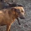 помощь бездомной собаке со щенками