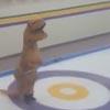 динозавры играют в кёрлинг