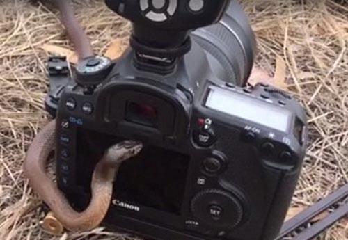 змее очень понравился фотоаппарат