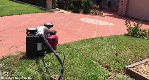 избиение газонокосилкой