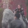 древняя каменная лошадь