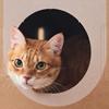 картонные города для кошек