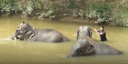 слонов спасают от жестокости