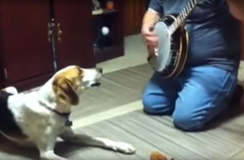 собака поёт под банджо