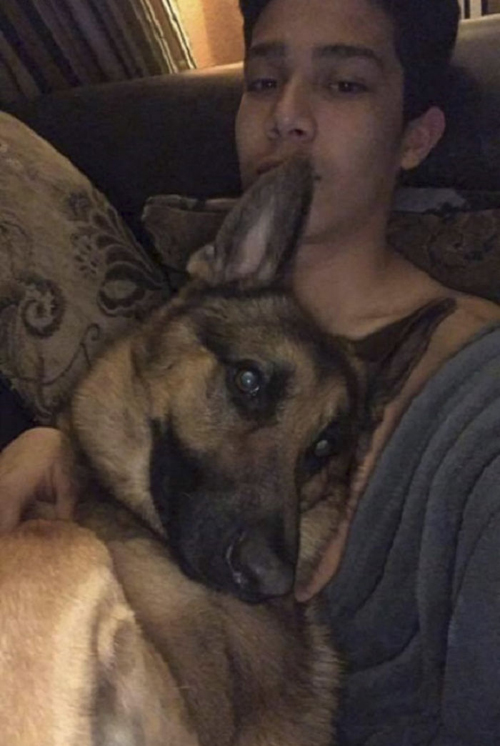 собака не побоялась грабителей