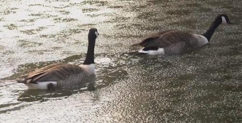 птицы справляются со льдом