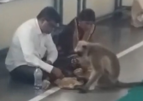 обезьяна явилась в храм