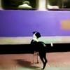 собака приходит на станцию