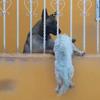 собака помогла застрявшему другу