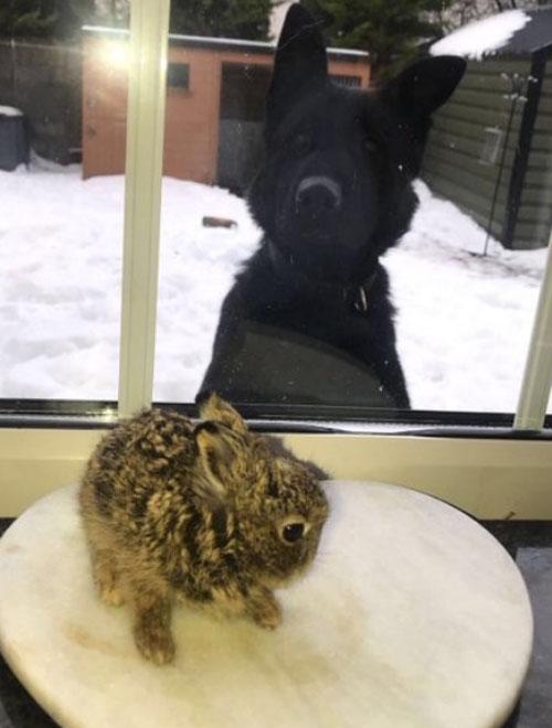 спасение крошечного зайчонка