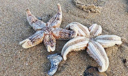 мёртвые морские звёзды