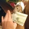 крыса ворует деньги