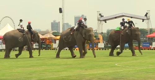 слоны на спортивном турнире