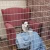 кресла для приютских собак