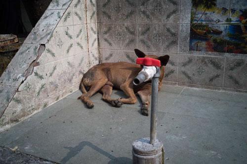забавные уличные фотографии