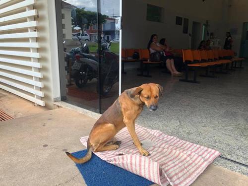 собака не уходит от больницы
