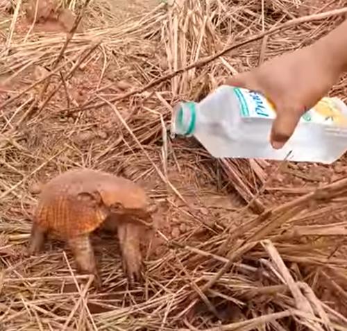 броненосца напоили водой
